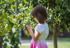 Яблоко выбранное девушкой стоковые изображения