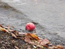 Яблоко в воде Стоковые Фотографии RF