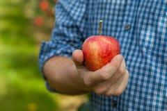 Яблоко в руке Стоковое Изображение