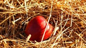 Яблоко в сене Стоковое Изображение