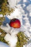 Яблоко в снеге Стоковые Изображения