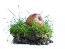 Яблоко в траве, часть природы для здоровья, Стоковые Фото