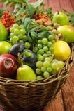 Яблоко, груша, слива, rowanberry и виноградина Стоковые Фото