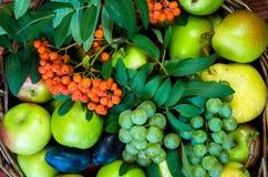 Яблоко, груша, слива, rowanberry и виноградина Стоковые Изображения