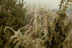 яблоко заволакивает вал солнца природы лужка ландшафта цветков Ветви можжевельника Стоковое Изображение RF