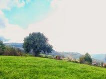 яблоко заволакивает вал солнца природы лужка ландшафта цветков Стоковое Фото
