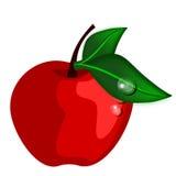 яблоко изолировало Стоковое Изображение