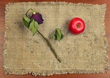 Яблоко и высушенный подняло на холст Стоковое фото RF