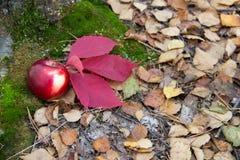 Яблоко и лист под деревом на мхе и старых листьях Стоковое Изображение