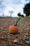 Яблоко и путь Стоковые Изображения RF