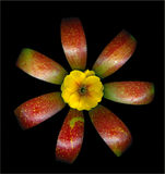 Яблоко и цветок Стоковая Фотография RF