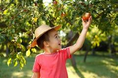 Яблоко маленького счастливого мальчика касающее Стоковые Фото