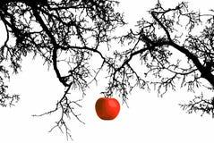 Яблоко на ветви Стоковая Фотография