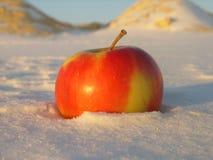 Яблоко на снеге Стоковые Изображения
