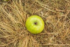 Яблоко на траве Стоковое Фото