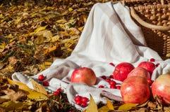 Яблоко на шотландке стоковые фото