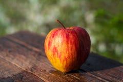 яблоко одно Стоковое Изображение RF
