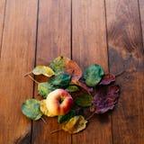 Яблоко с листьями Стоковое фото RF