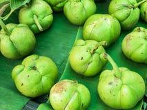 Яблоко слона Стоковая Фотография