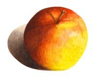 Яблоко с тенью в акварели Стоковая Фотография RF