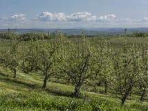 Яблоневый сад Нью-Йорка стоковое изображение