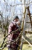 Яблоня фермера подрезая Стоковые Фотографии RF