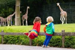 Ягнит наблюдая жираф на зоопарке Стоковые Изображения RF