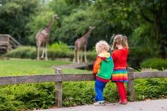 Ягнит наблюдая жираф на зоопарке Стоковое фото RF