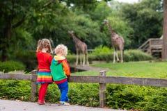 Ягнит наблюдая жираф на зоопарке Стоковое Изображение RF