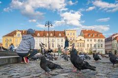 Ягнит подавая pidgeons в старом городке в Bydgoszcz Стоковое Изображение