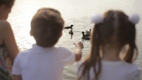 Ягнит подавая утки на пристани видеоматериал