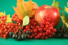 ягода золы покидает клен Стоковая Фотография