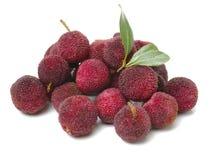 Ягода или bayberry воска с листьями стоковые фотографии rf