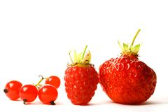 ягода одичалая Стоковая Фотография