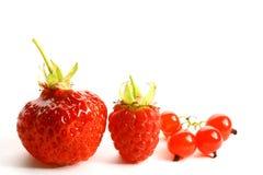 ягода одичалая Стоковая Фотография RF