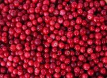 ягода предпосылки Стоковая Фотография RF