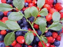 ягода предпосылки Стоковые Фотографии RF