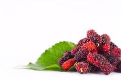 Ягода шелковицы с лист на еде плодоовощ шелковицы белой предпосылки здоровой Стоковые Фото
