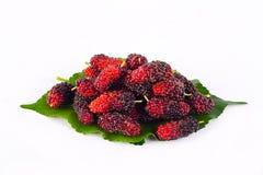 Ягода шелковицы с лист на еде плодоовощ шелковицы белой предпосылки здоровой Стоковая Фотография