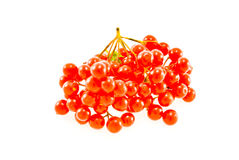 ягода Стоковые Изображения RF