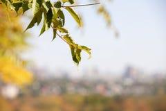 Ягоды боярышника на ветви на предпосылке осени естественной с малой глубиной поля стоковое фото rf