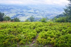 Ягоды Буша высокие в горах стоковое изображение