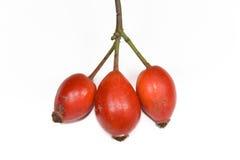 ягоды выслеживают розовую Стоковое Изображение RF
