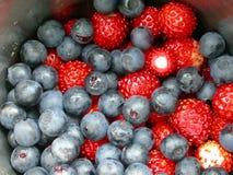 ягоды деревянные Стоковая Фотография