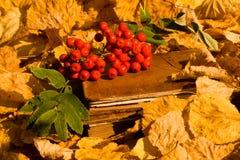 ягоды записывают красный цвет Стоковые Изображения RF