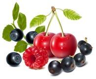 ягоды зрелые Стоковые Фотографии RF