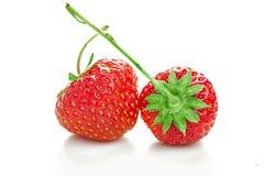 2 ягоды зрелых сочных клубник Стоковая Фотография RF