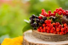 Ягоды и плодоовощи осени на деревянном столе на предпосылке природы Ягоды рябины, черные ягоды chokeberry, калина в стоковые изображения rf