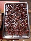 Ягоды кофейных зерен суша с процессом солнца естественным стоковые изображения rf
