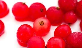 Ягоды красной смородины заморожено стоковое фото rf